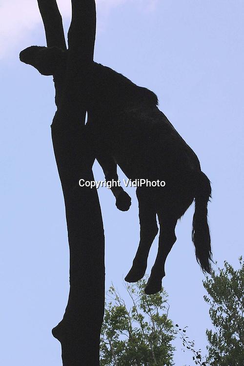 Foto: VidiPhoto..ARNHEM - Hoewel de paardenkarkassen aan de bomen in het Arnhemse park Sonsbeek doen denken aan de protesten in Kootwijkerbroek tijdens de MKZ-crisis, betreft het in dit geval een kunstuiting van de Vlaamse kunstenares Berlinde de Bruyckere. Van dode maar nog niet verstijfde paardenlijven zijn mallen gegoten. Over het polyester karkas zijn vervolgens aaneengenaaide paardenhuiden getrokken. In de bomen van het Sonsbeekpark is dat een van de tientallen kunstuitingen van de tentoonstelling Sonsbeek 2001, die zaterdag van start gaat.