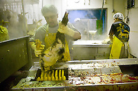 Workers pluck the slaughtered ducks from which fatty livers will be extracted at the Hudson Valley Foie Gras farm in Ferndale, USA, 16 March 2006.