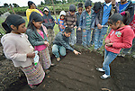 School children prepare garden plots and plant vegetables in San Jose la Frontera, a small Mam-speaking Maya village in Comitancillo, Guatemala. The program is jointly sponsored by the community's school and the Maya Mam Association for Investigation and Development (AMMID). Supervising the activity is Estuardo Aguilon, an agricultural specialist with AMMID.