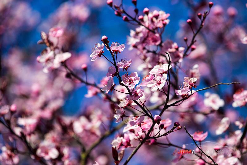 IMAGE: http://cdn.c.photoshelter.com/img-get/I0000d6uMmOzvjaw/s/800/I0000d6uMmOzvjaw.jpg