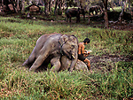 Elephant and Man Reading, Chiang Mai, Thailand, 2010<br />