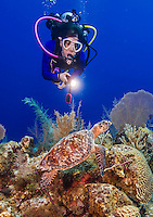 23 July 2015: SCUBA Diver Sally Herschorn observes a Hawksbill Sea Turtle (Eretmochelys imbricata) on the reef at Eagle Ray Pass, on the North Shore of Grand Cayman Island. Located in the British West Indies in the Caribbean, the Cayman Islands are renowned for excellent scuba diving, snorkeling, beaches and banking.  Mandatory Credit: Ed Wolfstein Photo *** RAW (NEF) Image File Available ***