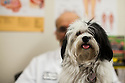 Dr. Robert Fox Therapy Dog