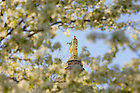 Mary statue atop the golden dome in spring.<br />