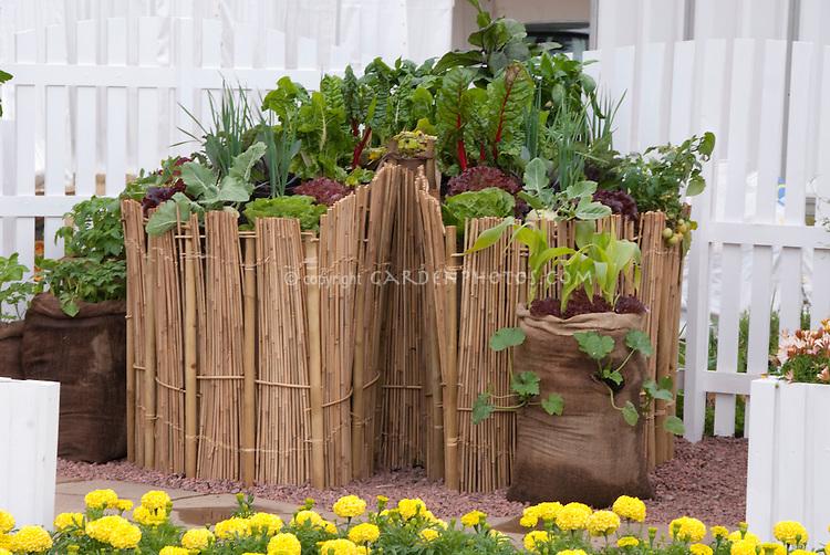 Raised bed vegetables including chard, lettuces salad greens, Container bag corn vegetable garden, picket fence, marigolds, hidden behind wicker fencing