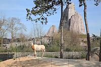 Oryx algazelle (Oryx dammah), zone Sahel-Soudan, Grand Rocher en arriere plan, new Parc Zoologique de Paris, or Zoo de Vincennes, (Zoological Gardens of Paris, also known as Vincennes Zoo), Museum National d'Histoire Naturelle (National Museum of Natural History), 12th arrondissement, Paris, France. Picture by Manuel Cohen