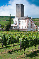 Rudesheim am Rhein, Hessen, Germany, July 2010. The vinyards around Rudesheim offer spectacular views of the the river Rhine.  Rüdesheim is a winemaking town in the Rhine Gorge and thereby part of the UNESCO World Heritage Site. The fertile river valleys and the rolling hills form the basis for some of Germany's best wines.  Photo by Frits Meyst / Adventure4ever.com