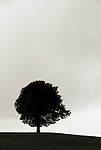 A silhouette of a lonely tree