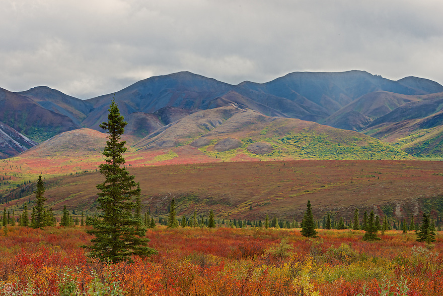 As autumn approaches the North the plants begging to change from lush green to vibrant reds and golds more beautiful than any sunset.