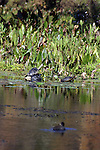 Turtle soak up the sun on a cool day.