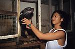 Cockfighting Animal Trade Sarawak