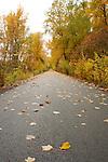 Idaho, Kingston. Fallen leaves on the Trail of the Coeur D Alenes bike route through the autumn splendor