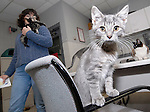 Sentinel/Dan Irving.Harbor Humane Society executive director Linda Bradley watches over several unnamed kittens on Wednesday afternoon. The kittens and the mother cat were found abandoned..(11/1/06)