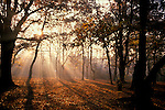 Early Morning sun in woodland, Streatham Common, London, autumn.United Kingdom....