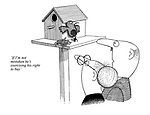 'If I'm not mistaken he's exercising his right to buy' (cartoon showing a bird taking ownership of his bird house by paying with worms)
