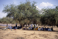 Akadaney, Niger, Africa - Fulani Men at Geerewol, Resting Under Acacia Trees.  The Geerewol, at the end of the rainy season, is a time for arranging marriages, renewing family ties, catching up on news, political consultations, and the renewing of bonds between disparate clans of the nomadic Fulani.