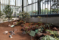New Caledonia Glasshouse (formerly The Mexican Hothouse), 1830s, Charles Rohault de Fleury, Jardin des Plantes, Museum National d'Histoire Naturelle, Paris, France.  Low angle view of the interior of the glasshouse showing the newly planted Glasshouse which is divided into areas representing the four forest climates. Here we see  the savannah section. The New Caledonia Glasshouse, or Hothouse, was the first French glass and iron building.