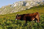 Asturia, Europe, Geography, National Park, Picos de Europa, Scenic along hiking-path between La Roble (Sotres) and Pico Uriello (Naranjo de Bulnes); Fotomotiv, Landschaft entlang des Wanderweges zwischen La Roble (Sotres) and Pico Uriello (Naranjo de Bulnes); Spain, Asturien, Geografie, Spanien, Asturias, Geografia, landscape, landscape form, landscape forms, landscapes, national parks, Nationalpark, Nationalparks, Nature, nature reserve, nature reserves, Wildlife, Landschaft, Landschaftsform, Landschaftsformen, Natur, Naturpark, naturparks, Naturreservat, Naturreservate, Naturschutzgebiet, Naturschutzgebiete, Naturschutzpark, Naturschutzparks, Wildnis, &aacute;rea protegida, paisajes, parque nacional, parque natural, parques nacionales, parques naturales, reserva, reservas, salvaje, agrar, Agrarwirtschaft, Agrikultur, Gartenbau, Landwirtschaft, Milcherzeugung, Milchtierhaltung, Milchwirtschaft, Produktion, Produktionsformen, Produktionsst&auml;tten, Tierwirtschaft, Tierzucht, Tierz&uuml;chter, Viehzucht, Rinderhaltung, Rindermast, Viehwirtschaft, Viehzuchten, Viehz&uuml;chter, agriculture, cattle breeding, cattle farming, livestock breeding, manufactoring, manufacture, production, stock farming, diary farming, Alm, Koppel, Koppeln, Kuhweide, Kulturlandschaft, Kulturlandschaften, Weiden, alpine pasture, manmade landscape, pastures