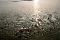 A dead body floating on the Ganges river in Varanasi, Uttar Pradesh, India.