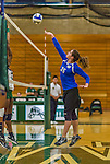 1 November 2015: Yeshiva University Maccabee Middle Blocker Gavriela Colton, a Junior from Teaneck, NJ, hits one over against the SUNY College at Old Westbury Panthers at SUNY Old Westbury in Old Westbury, NY. The Panthers edged out the Maccabees 3-2 in NCAA women's volleyball, Skyline Conference play. Mandatory Credit: Ed Wolfstein Photo *** RAW (NEF) Image File Available ***