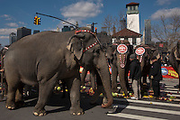 "Elephants are seen during ""Jumbo's coming to DUMBO"" where Asian Elephants dance in a party at brooklyn bridge to commemorate its inaugural show in Brooklyn. Photo by Eduardo Munoz Alvarez / VIEWpress."