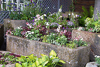 Trough container gardens of alpine plants under tree