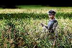 A rice farmer checks his rice for harvest on Don Khong (island), Laos.