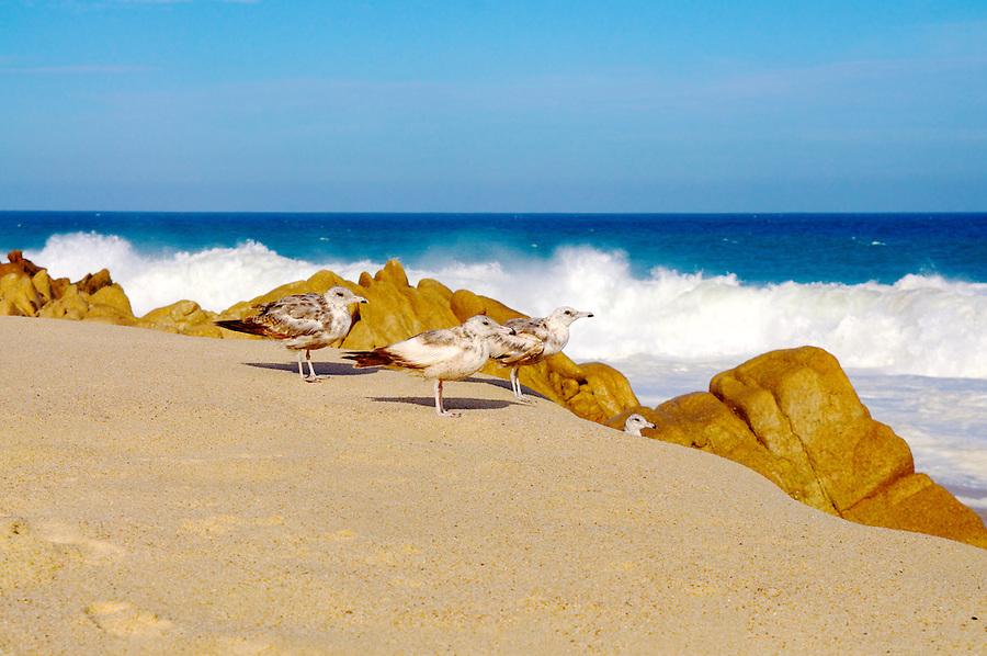 San Jose del Cabo, Baja California Sur, Mexico