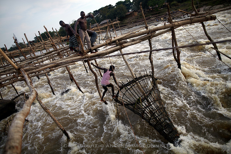 Fishermen check their bamboo nets at Wagenia Falls (or Boyoma Falls) on the left bank of the river, near Kisangani, DR Congo. The left bank consists of larger series of wooden frames stretching across a fast body of water.