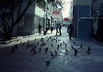 pigeons on street in Willemstad