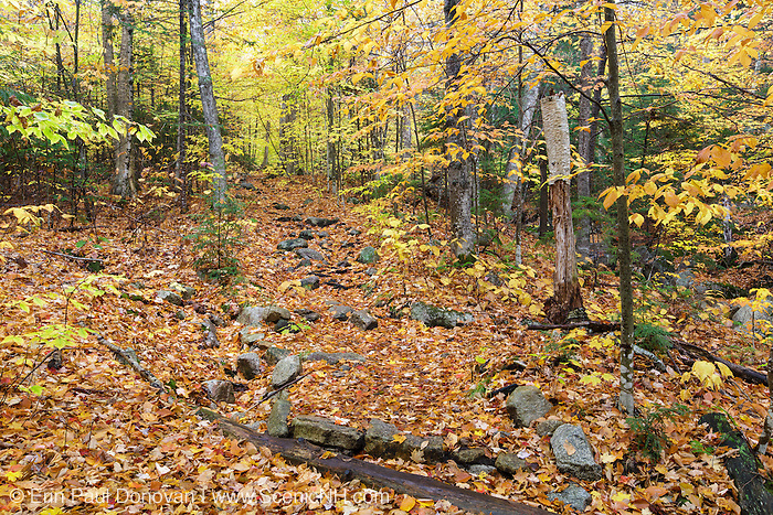 Leaf drop along the Mt. Tecumseh Trail in Waterville Valley, New Hampshire during the autumn months.