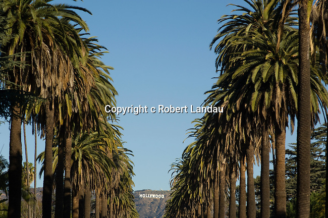 Palm Trees Hollywood Hollywood Sign And Palm Trees