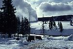 Bison and Old Faithful Geyser eruption