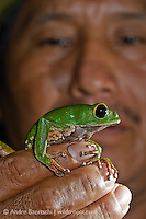 Peruvian park ranger holds and examines a Leaf Frog (Phyllomedusa camba) at night in lowland tropical rainforest, Rio Amigos Conservation Concession, Madre de Dios, Peru.