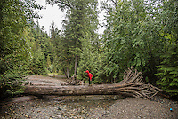 Family hiking along the Trail of Cedars and Avalanche Creek at Glacier National Park, Montana.