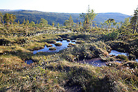 Roltdalen nasjonalpark. Foto: Bente Haarstad