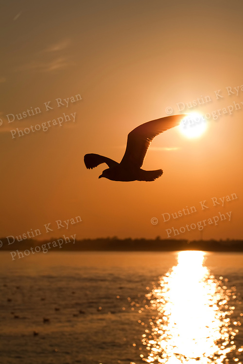 Charleston South Carolina Lowcountry Sunset on the Battery Seagull Flying