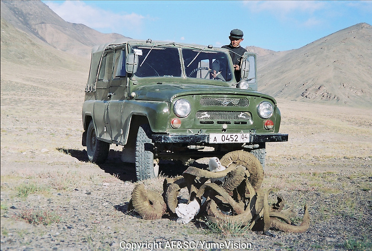 Horn of Marco Polo at 5000 meters hight..The M41 Highway from the Ismaili capital of Khorog to the south capital of Kyrgyzstan - Osh, via the head district of Badakhshan - Murgab and the Akbajtal Pass at 4655 meters.