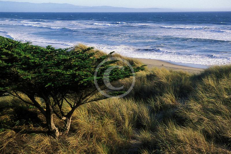 California, Santa Cruz County, Pajaro Dunes, Beach and dune grass