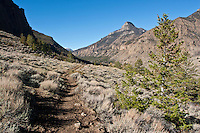 Ishawooa trail in the Shoshone National Forest Wyoming