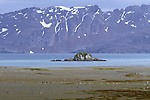 Penguins dot a beach of South Georgia Island