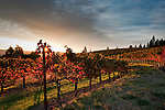 Somerston Vineyards, Napa Valley