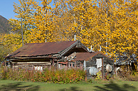 Log cabin in historic community of Wiseman, Alaska.