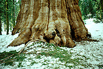 CA: Sequoia-Kings Canyon National Park, General Sherman Tree, Largest of the Sequoia trees, sequoiadendron giganteu, largest tree on earth         .Photo Copyright: Lee Foster, lee@fostertravel.com, www.fostertravel.com, (510) 549-2202.Image: catree207