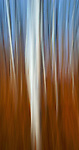 #27 Aspens, Late Fall #6 Motion