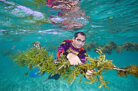 Juni, a seaweed farmer from Caluya checks for algae growth on his seaweed.