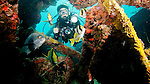 Diver, Porkfish and Black Margate on the M.V. Benwood, Key Largo, Florida