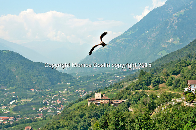 Gufyland Bird Sanctuary in Dorf Tirolo near Merano, Italy; the Gufyland Bird Sanctuary provides sanctuary to injured birds, rehabilitation, and releasing birds back into the wild while also providing educational talks to the public; the bird sanctuary has been in operation since 1989