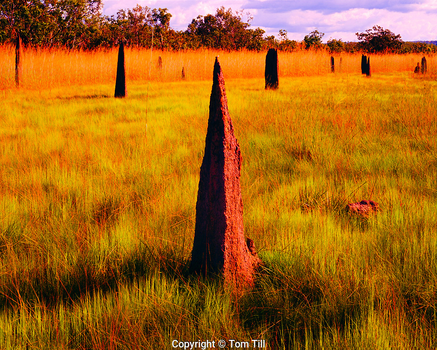 Magnetic anthills, Lichfield National Park, Australia, Top end of Northern Territory, Anthill situated along earth's magnetic field, near Darwin