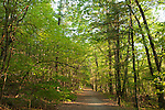 A forest road in Harold Parker State Forest, Andover, Massachusetts. The light green leaves of spring are almost fully grown.